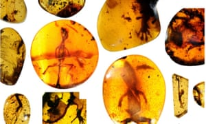 Reptiles fossilised in Cretaceous amber in Myanmar.