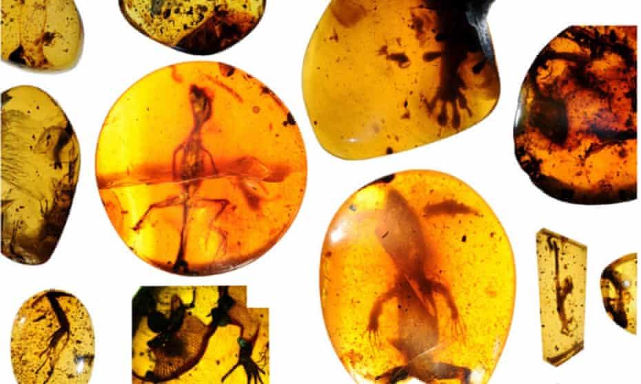 Reptiles fossilised in Cretaceous amber in Myanmar.