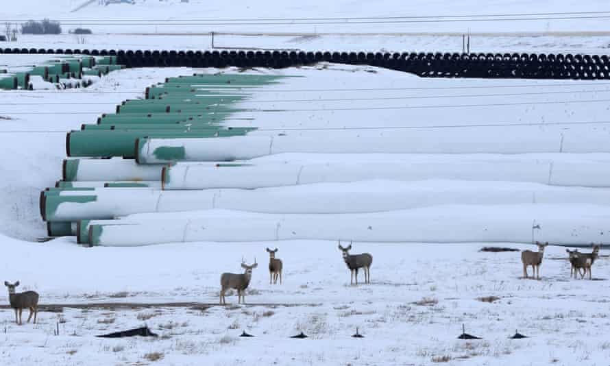 Deer gather at a depot used to store pipes for TransCanada Corp's planned Keystone XL oil pipeline in Gascoyne, North Dakota.