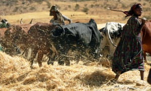 Ethiopia's farmers fight devastating drought with land