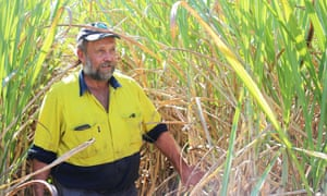 Cane farmer Colin Ash at his property in Mirani, Queensland: 'You just can't get sentimental about these things.'