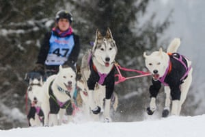 A competitor rides his dog sled