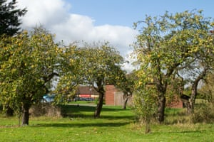 An old apple orchard by the A14 near St Ives, Huntingdonshire.