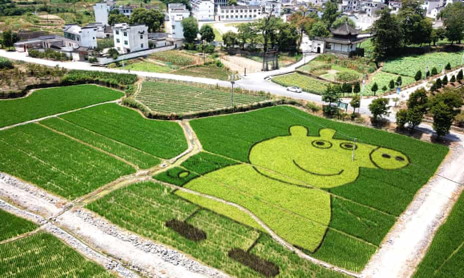 Global reach … a Rice Field In Huangshan, China, with an image of Peppa