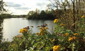 Walthamstow Wetlands: a view taken looking over water from dense flower and plant area.
