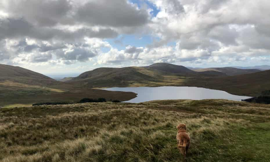 Mountains of Mourne, with lake and dog