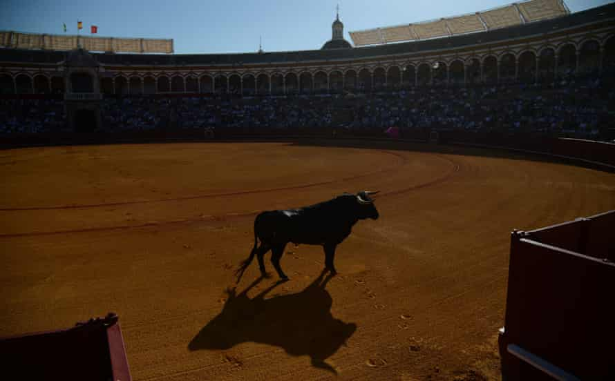 the Seville bullring.