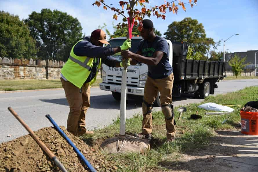 Baltimore Tree Trust crew members plant a Red Maple in the Johnston Square neighborhood of Baltimore.