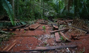 Illegally logged timber in Uru-Eu-Wau-Wau territory in Rondônia state, Brazil.