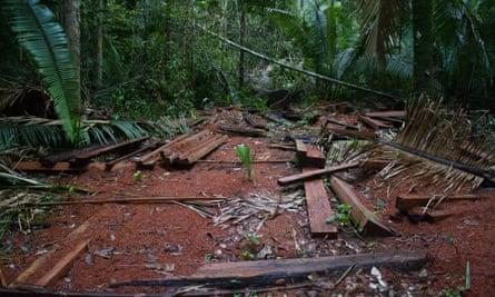 Illegally logged timber in Uru-Eu-Wau-Wau territory in Rondônia state, Brazil.
