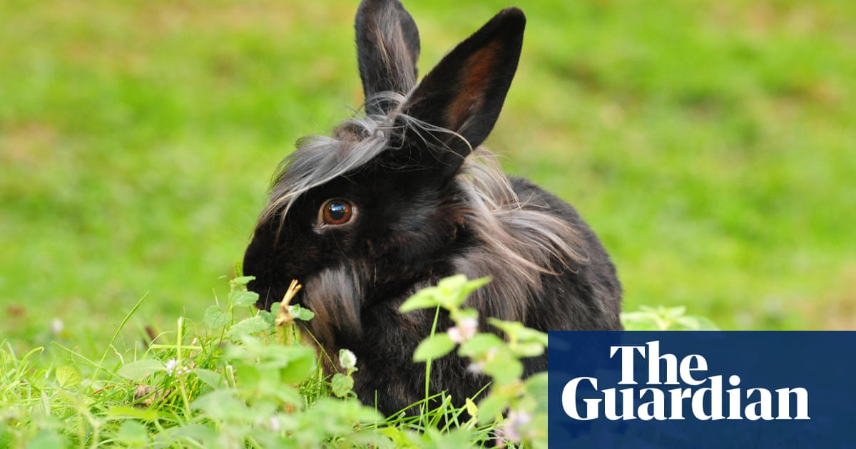 Domestic rabbits plagued by diseases and poor diets, study finds