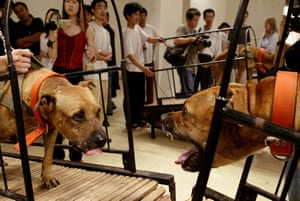 Sun Yuan and Peng Yu's Dogs That Cannot Touch Each Other, a seven-minute video with eight American pit bulls on eight treadmills.