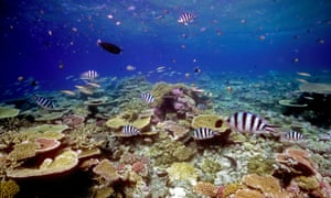 File photograph of healthy coral reef in northern Great Barrier Reef.