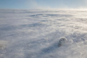 Habitat: Spectacular Isolation (Mountain Hare), Cairngorms National Park, Highlands, Scotland