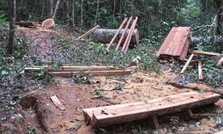 An illegal logging operation in Cameroon.