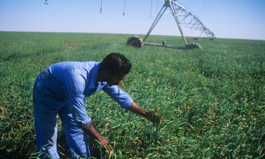 Qatar is also producing more of its own cereals