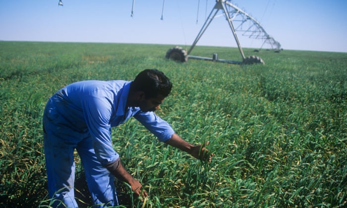Land of milk and money: Qatar looks to farms to beat the
