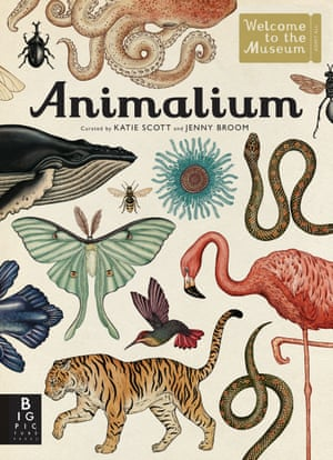 Animalium illustrated by Katie Scott, written by Jenny Broom (Big Picture Press)
