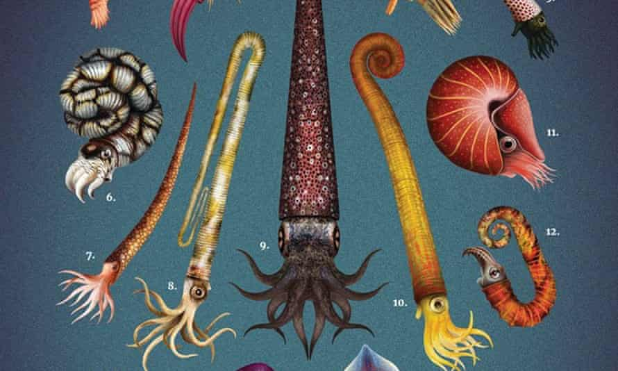 A detail from Franz Anthony's Fossil Cephalopods plate.