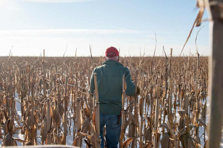 Richard Oswald walks out into a field of unharvested corn on his farm.