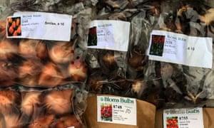 Tulip Bulbs various Allan Jenkins