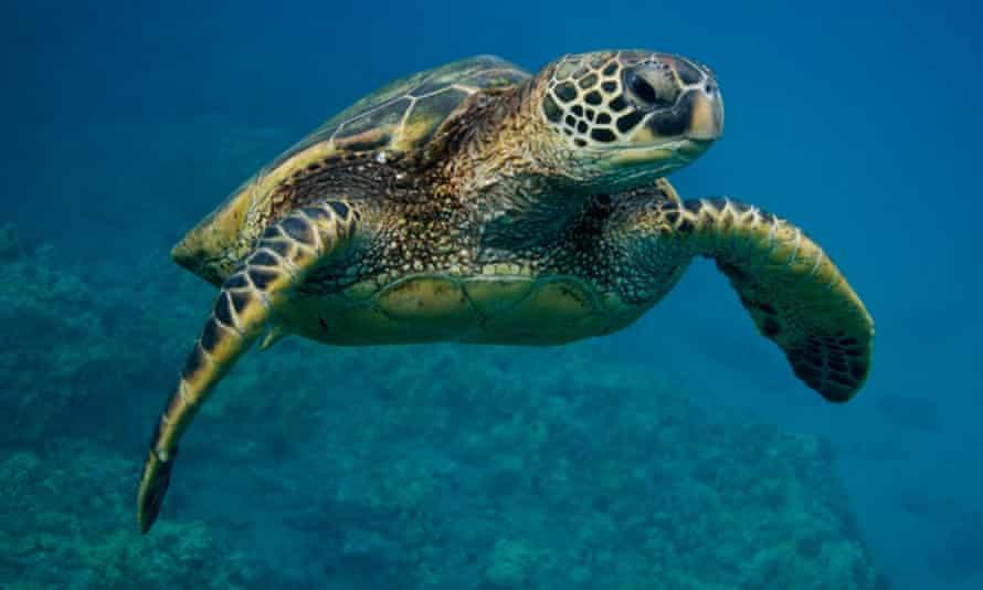 Single turtles swimming