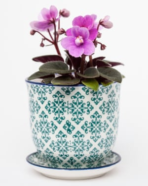 'The gold standard for continuous flowers': African violets.