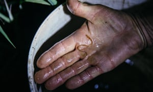A fisher holds an elver, a juvenile eel, caught on the River Parrett in Somerset, UK. A centuries-old trade in eels has been thwarted by trafficking and now Brexit. An unusual rewilding mission is under way that hopes to aid a 4,000-mile migration of the eel back to British rivers and stop eels sliding into extinction