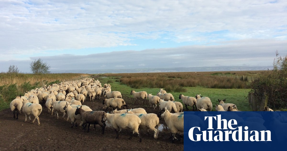 Gower lamb is first British food to get protection under post-Brexit scheme