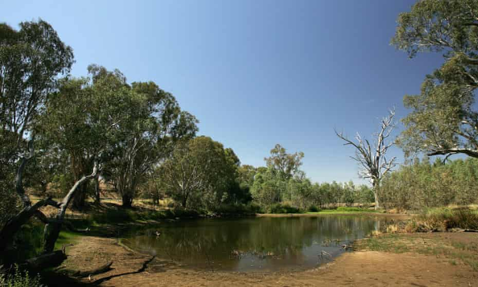 The mighty Murry river in Albury – home to dozens of endangered species of birds and mammals