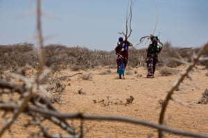 Women carry firewood towards their temporary homes in Caynabo