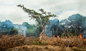 Deforestation has long had an impact on our ecology.