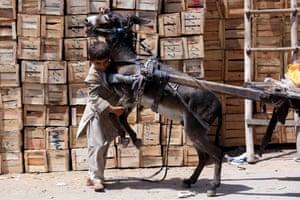 boy grabs donkey's legs