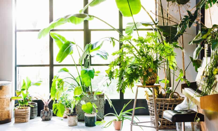 A room full of plants