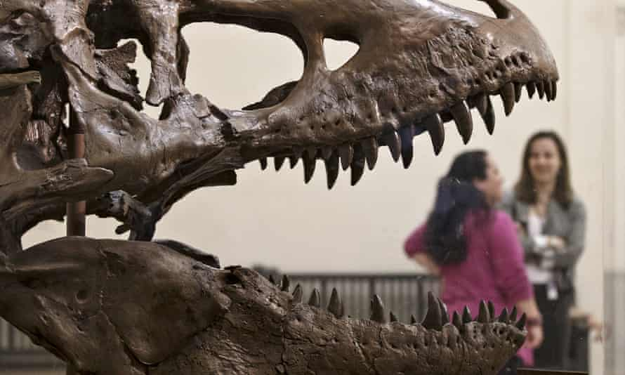 Cast of Tyrannosaurus rex jaws gaping – photographed as if snapping down on visitors in museum