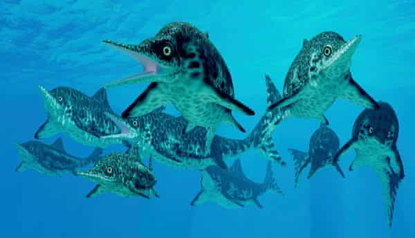 Ichthyosaurs were marine carnivorous reptiles that lived in the oceans 250 million years ago.