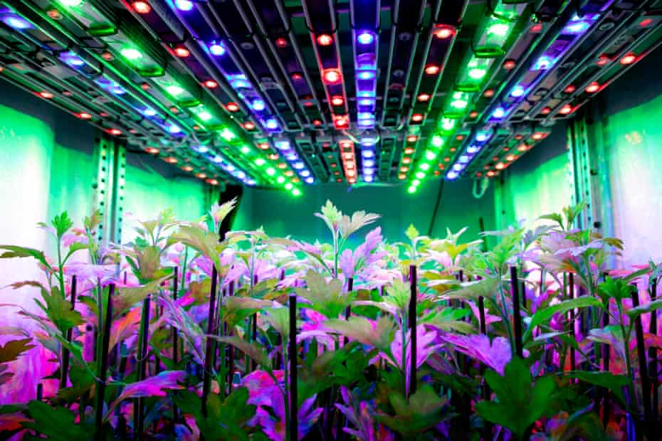Coloured lights over plants at Wageningen University