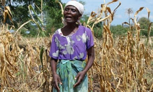 Farmer Serena Gadinala stands next to her wilted crops in the Neno district of southern Malawi.