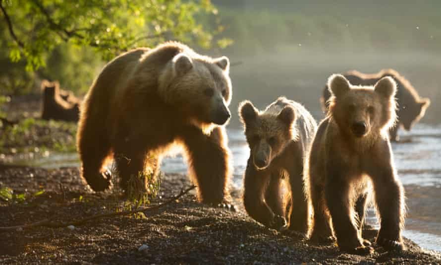 A mother and two cubs ... A Perfect Planet.