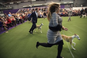 Cheslie Pickett Smithey, right, runs with her Whippet Bourbon, winner in the Best of Breed event, while her husband Justin Smithey runs with Whiskey, at the Westminster Kennel Club dog show