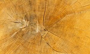 Tree rings from a newly-felled oak.