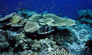 A bleached section of the Great Barrier Reef.