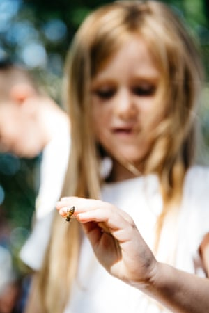 A young visitor watches as a bee crawls on her hand.