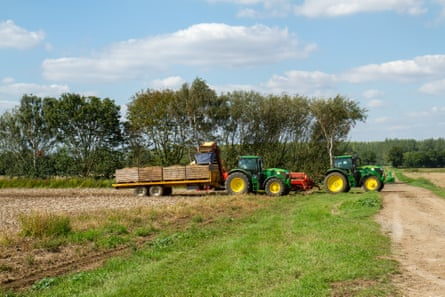 Two tractors harvesting Bedfordshire potatoes in the September sunshine.