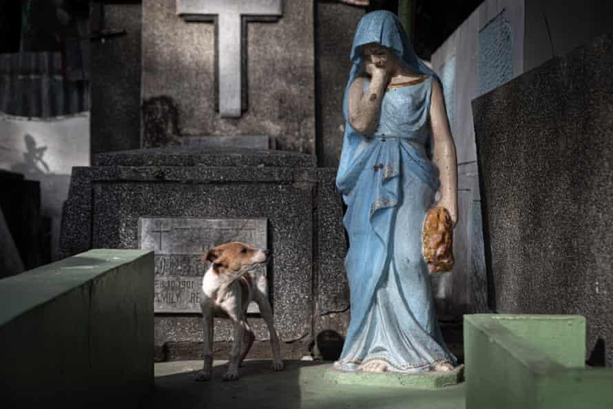 سگی به مجسمه ماری نگاه می کند