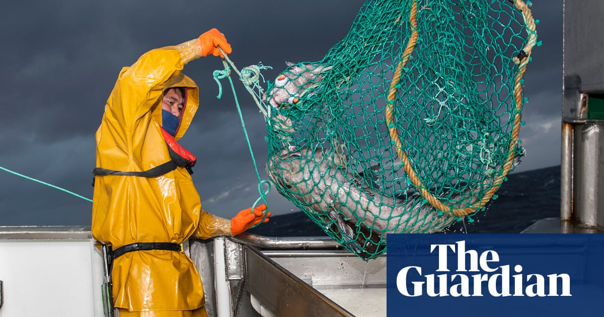 Hook to plate: how blockchain tech could turn the tide for sustainable fishing