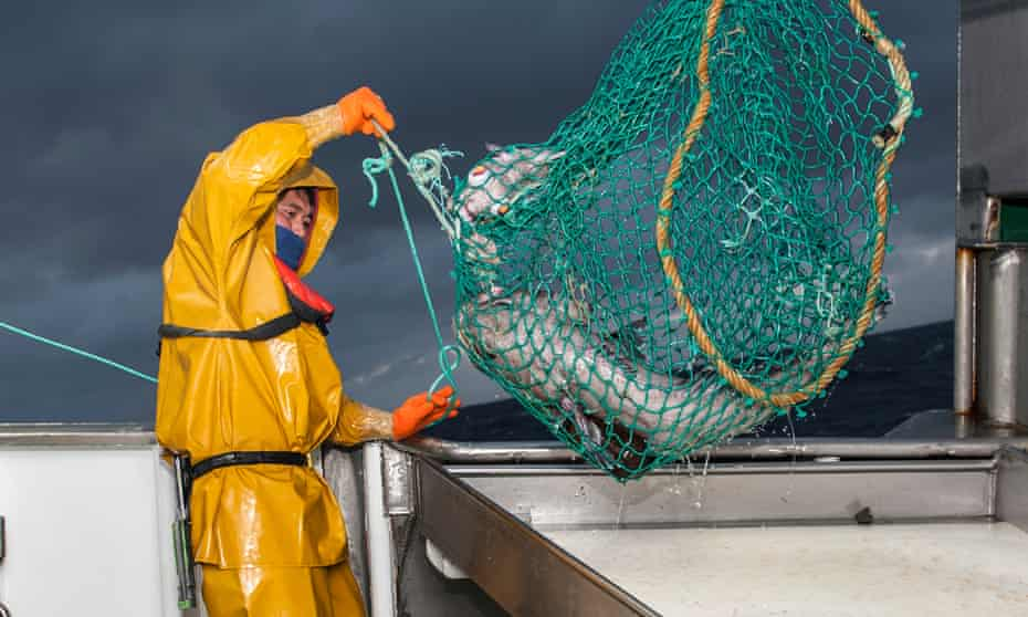 Fishing for Patagonian toothfish in the southern Atlantic