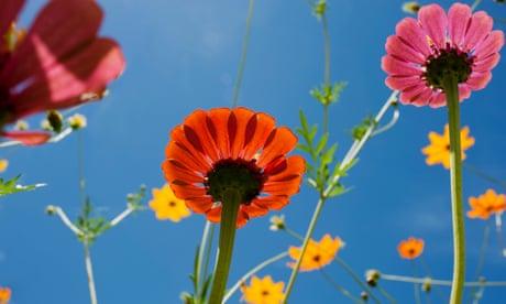 Beginner in the garden? Four top tips