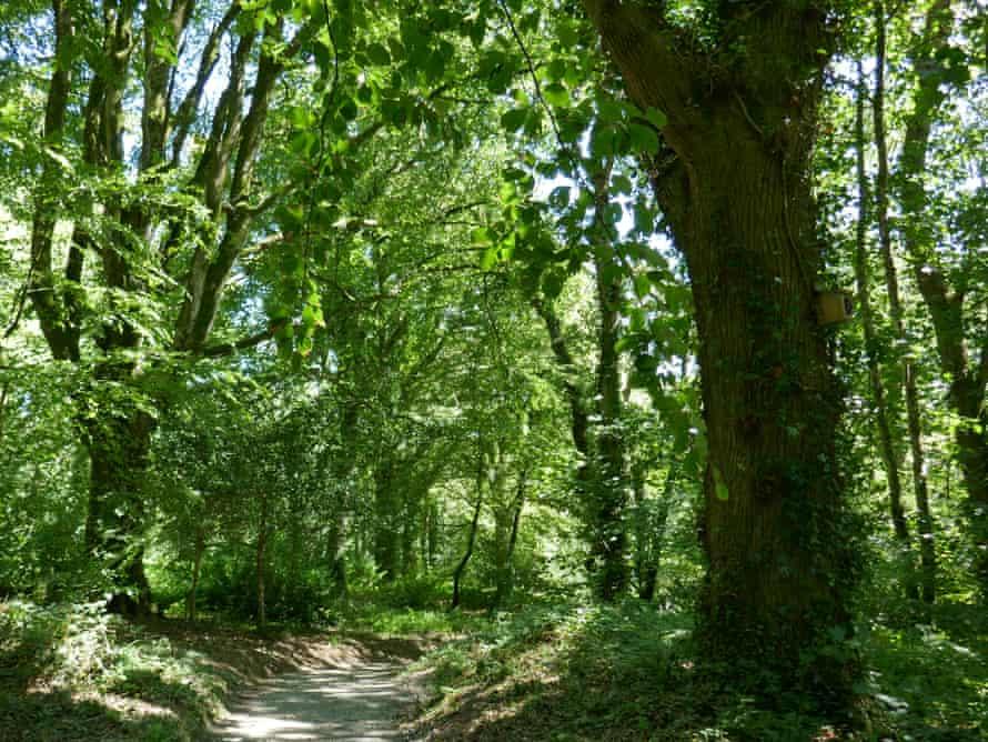Path through a wood at Lanhydrock, Cornwall, UK.