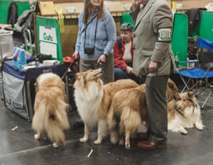 A group of collies patiently wait while their owners chat